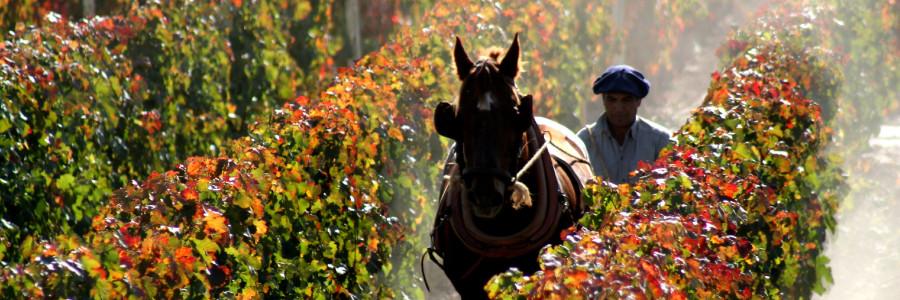 Cheval Blanc – De Bordeaux para os Andes